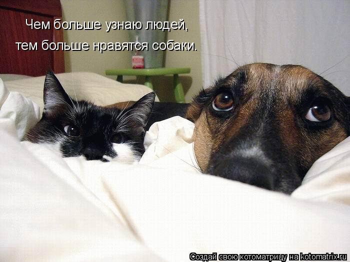 Котоматрица: Чем больше узнаю людей,  тем больше нравятся собаки.