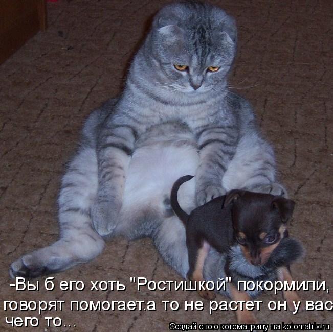 """Котоматрица: -Вы б его хоть """"Ростишкой"""" покормили, говорят помогает.а то не растет он у вас  чего то..."""