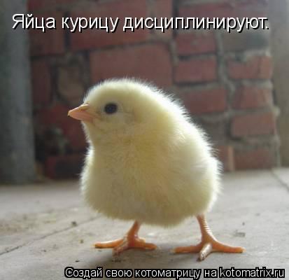 Котоматрица: Яйца курицу дисциплинируют.