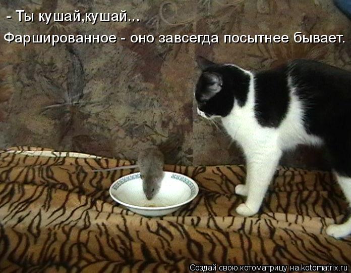 Котоматрица: - Ты кушай,кушай... Фаршированное - оно завсегда посытнее бывает.