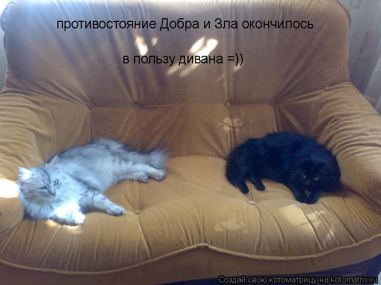 Котоматрица: противостояние Добра и Зла окончилось   в пользу дивана =))