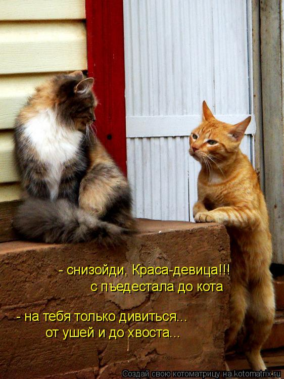 Котоматрица: - снизойди, Краса-девица!!! с пъедестала до кота - на тебя только дивиться... от ушей и до хвоста...