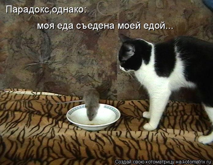 Котоматрица: Парадокс,однако: моя еда съедена моей едой...