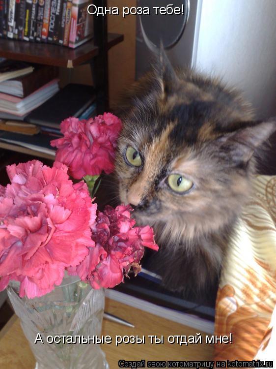 Котоматрица: А остальные розы ты отдай мне! Одна роза тебе!