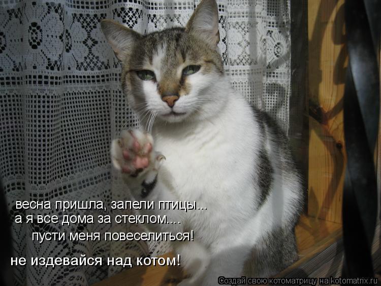 Котоматрица: весна пришла, запели птицы... а я все дома за стеклом.... пусти меня повеселиться! не издевайся над котом!