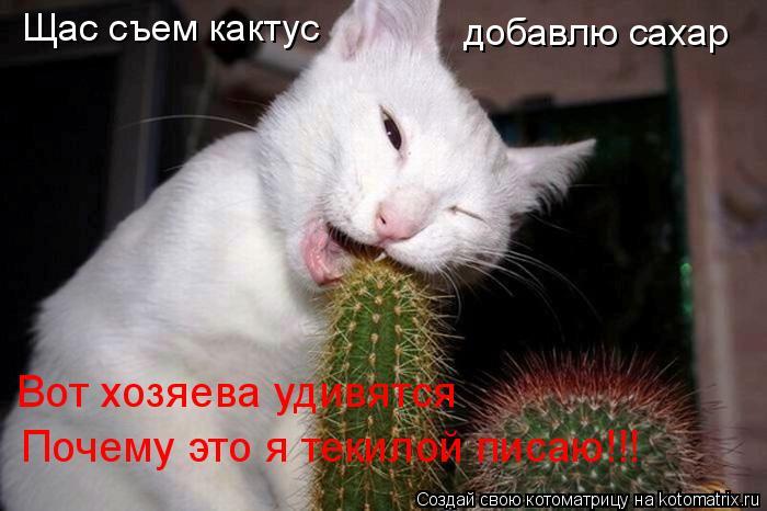 Котоматрица: Щас съем кактус добавлю сахар Вот хозяева удивятся Почему это я текилой писаю!!!