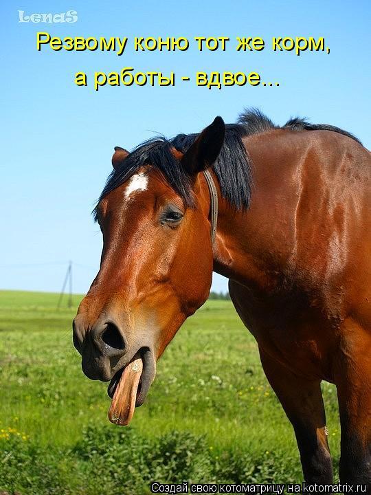 Котоматрица: Резвому коню тот же корм,  а работы - вдвое...