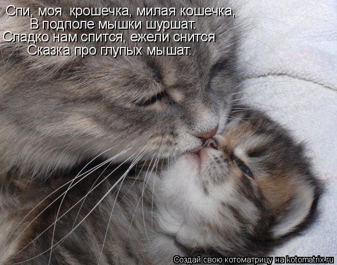 Котоматрица: Спи, моя  крошечка, милая кошечка, В подполе мышки шуршат. Сладко нам спится, ежели снится  Сказка про глупых мышат.