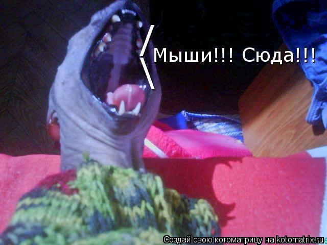 Котоматрица: /  Мыши!!! Сюда!!!