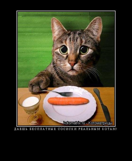 Котоматрица: Даешь бесплатные сосиски реальным котам!