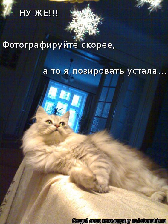Котоматрица: НУ ЖЕ!!!  Фотографируйте скорее,  а то я позировать устала...