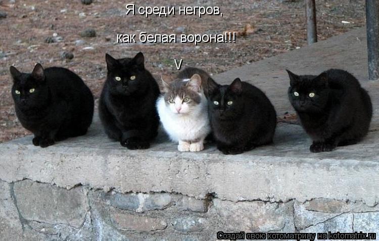 Котоматрица: Я чувствую себя среди негров Я среди негров, как белая ворона!!! /