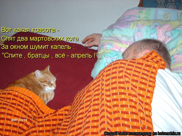 """Котоматрица: """"Спите , братцы , всё - апрель !"""" За окном шумит капель : Спят два мартовских кота . Вот какая красота -"""