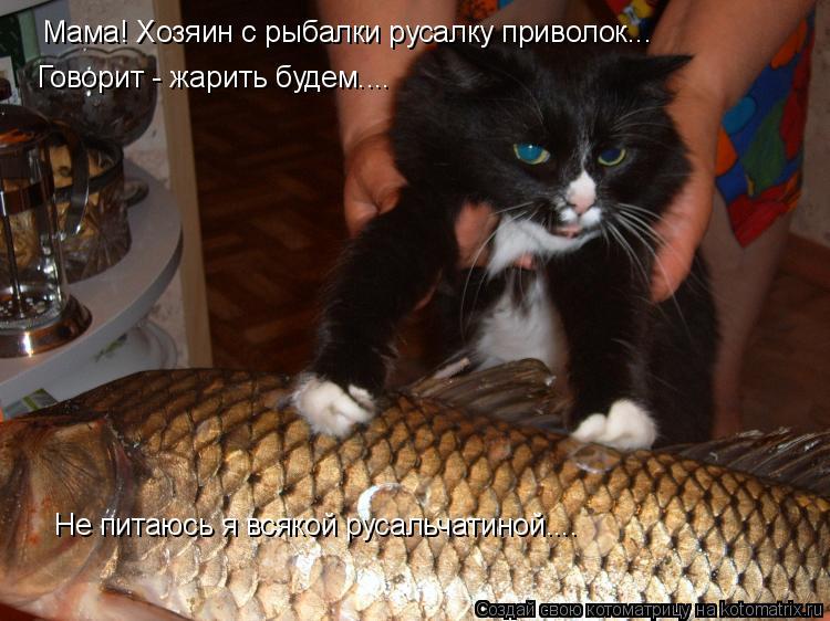Котоматрица: Мама! Хозяин с рыбалки русалку приволок... Говорит - жарить будем.... Не питаюсь я всякой русальчатиной....