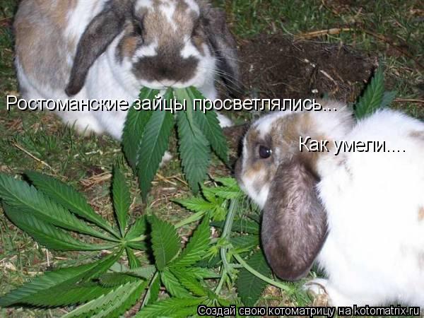 Котоматрица: Ростоманские зайцы просветлялись... Как умели....
