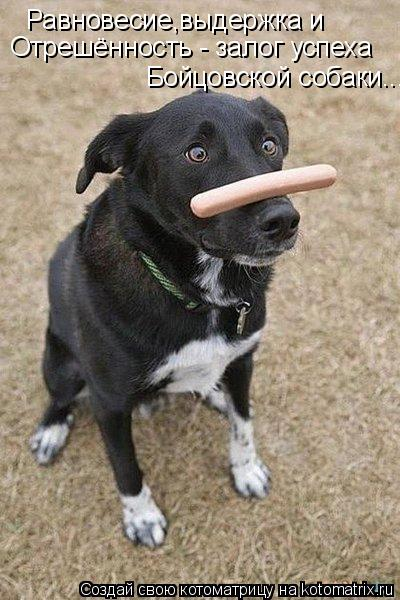 Котоматрица: Равновесие,выдержка и  Отрешённость - залог успеха Бойцовской собаки...