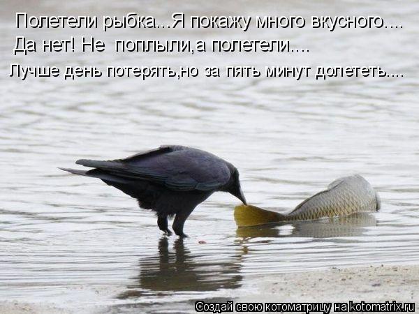 Котоматрица: Полетели рыбка...Я покажу много вкусного.... Да нет! Не  поплыли,а полетели.... Лучше день потерять,но за пять минут долететь....