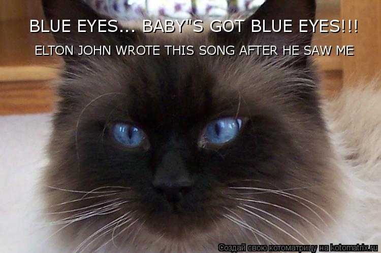 """Котоматрица: ELTON JOHN WROTE THIS SONG AFTER HE SAW ME BLUE EYES... BABY""""S GOT BLUE EYES!!!"""