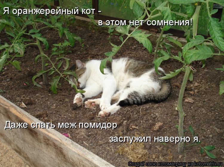 Котоматрица: Я оранжерейный кот - в этом нет сомнения! Даже спать меж помидор заслужил наверно я.