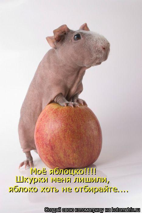 Котоматрица: Моё яблоцко!!!!  Шкурки меня лишили,  яблоко хоть не отбирайте....
