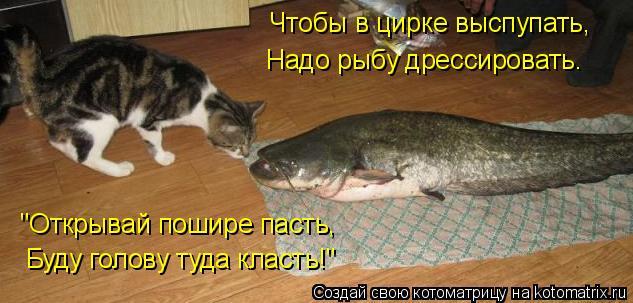 """Котоматрица: Чтобы в цирке выспупать,  Надо рыбу дрессировать. """"Открывай пошире пасть, Буду голову туда класть!"""""""