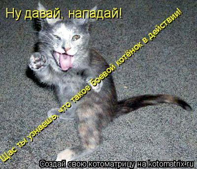 Котоматрица: Ну давай, нападай! Щас ты узнаешь, что такое боевой котёнок в действии!
