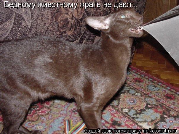 Котоматрица: Бедному животному жрать не дают...
