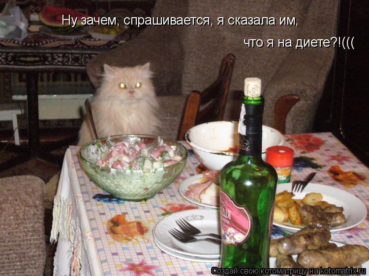 Котоматрица: Ну зачем, спрашивается, я сказала им,  что я на диете?!(((