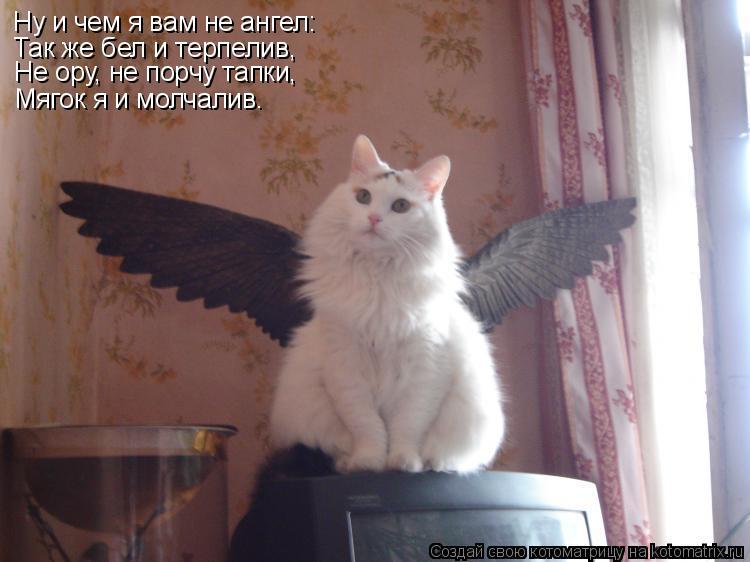 Котоматрица: Ну и чем я вам не ангел: Так же бел и терпелив, Мягок я и молчалив. Не ору, не порчу тапки,