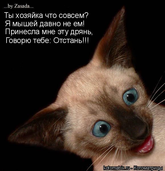 Котоматрица: Ты хозяйка что совсем? Я мышей давно не ем! Принесла мне эту дрянь, Говорю тебе: Отстань!!!