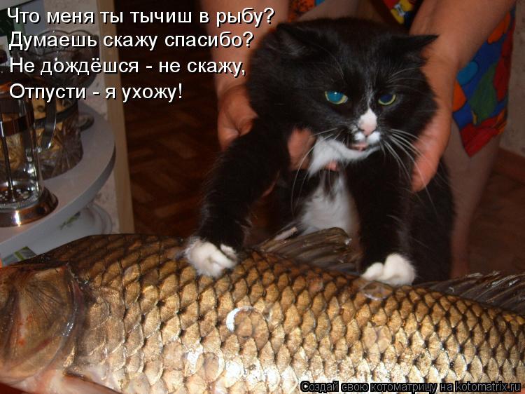 Котоматрица: Что меня ты тычиш в рыбу? Думаешь скажу спасибо? Не дождёшся - не скажу, Отпусти - я ухожу!