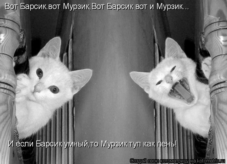 Котоматрица: Вот Барсик.вот Мурзик,Вот Барсик вот и Мурзик... И если Барсик умный,то Мурзик туп как пень!