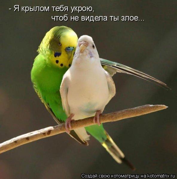 Котоматрица: - Я крылом тебя укрою, чтоб не видела ты злое...
