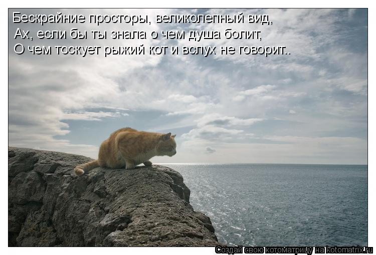 Котоматрица: Бескрайние просторы, великолепный вид, Ах, если бы ты знала о чем душа болит, О чем тоскует рыжий кот и вслух не говорит..