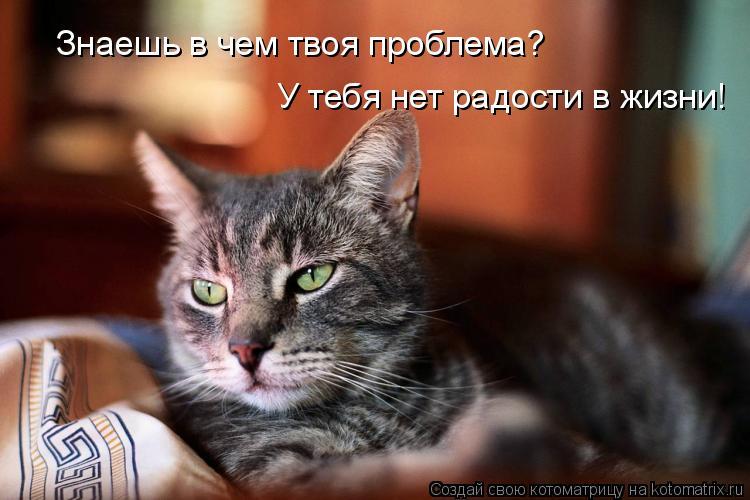 Котоматрица: Знаешь в чем твоя проблема? У тебя нет радости в жизни!