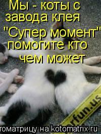 """Котоматрица: Мы - коты с  завода клея """"Супер момент"""" помогите кто чем может"""