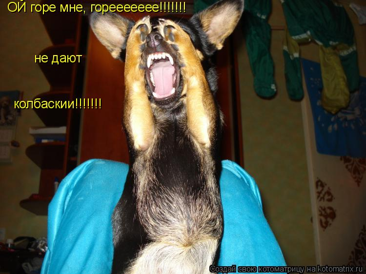 Котоматрица: ОЙ горе мне, гореееееее!!!!!!! не дают колбаскии!!!!!!!