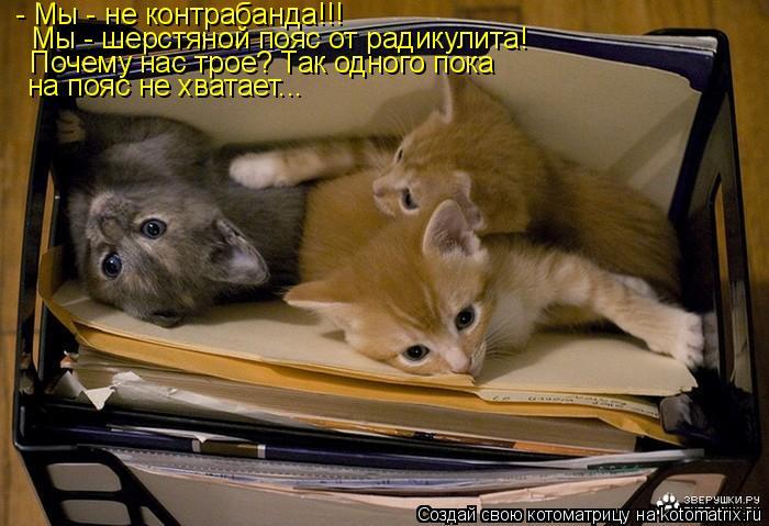 Котоматрица: - Мы - не контрабанда!!! Мы - шерстяной пояс от радикулита! Почему нас трое? Так одного пока  на пояс не хватает...
