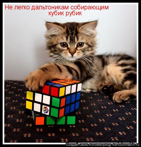 Котоматрица: Не легко дальтоникам собирающим кубик рубик