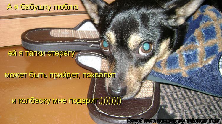 Котоматрица: А я бабушку люблю ей я тапки стерегу может быть прийдет, похвалит и колбаску мне подарит;))))))))