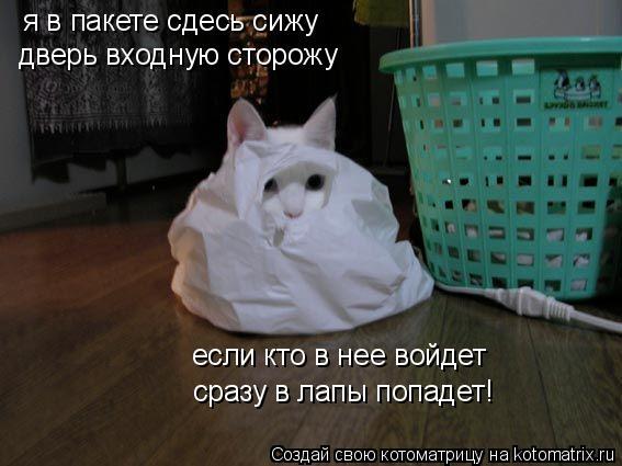 Котоматрица: я в пакете сдесь сижу дверь входную сторожу если кто в нее войдет сразу в лапы попадет!