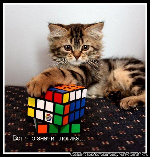 Котоматрица: Вот что значит логика...