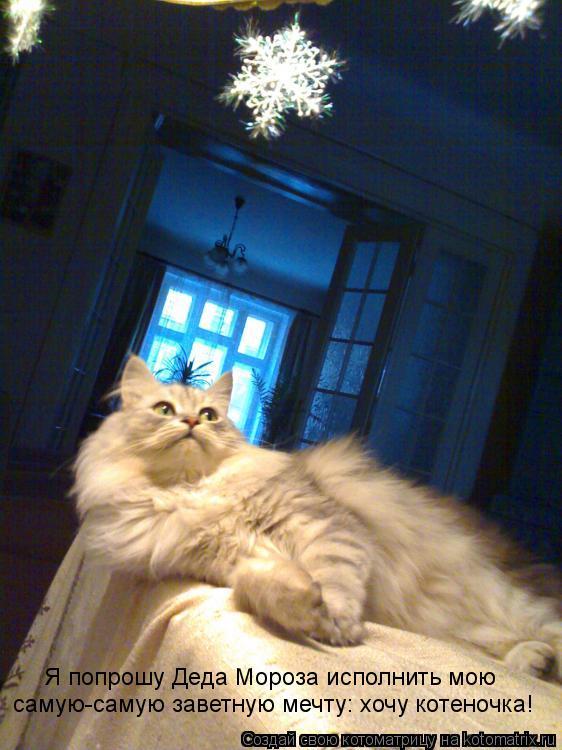 Котоматрица: Я попрошу Деда Мороза исполнить мою самую-самую заветную мечту: хочу котеночка!