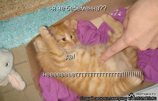 Котоматрица: -я чё беременна?? да! неееееееетттттттттттттттт!!!!!!!!!!