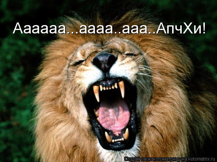 Котоматрица: Аааааа...аааа..ааа..АпчХи!