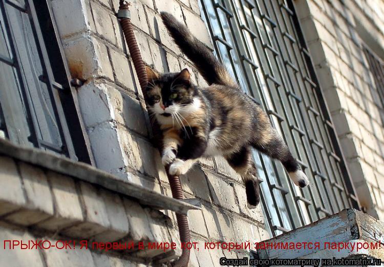 Котоматрица: ПРЫЖО-ОК! Я первый в мире кот, который занимается паркуром!