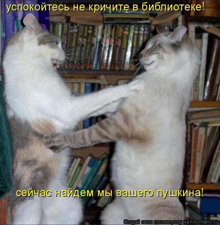 Котоматрица: успокойтесь не кричите в библиотеке ! сейчас найдем мы вашего пушкина!