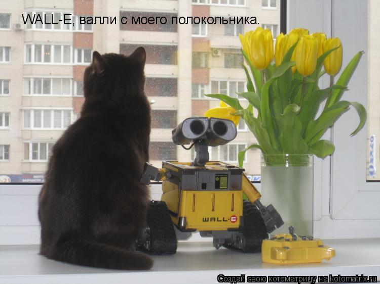 Котоматрица: WALL-E, валли с моего полокольника.