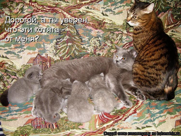 Котоматрица: Дорогой, а ты уверен, что эти котята -  от меня?