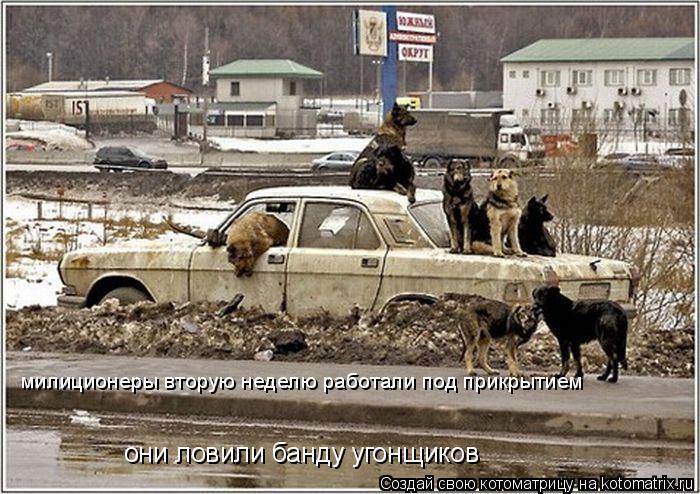 Котоматрица: милиционеры вторую неделю работали под прикрытием они ловили банду угонщиков